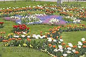 Luiz, FLOWERS, photos, BRLH8696,#f# Blumen, Natur, flores, naturaleza