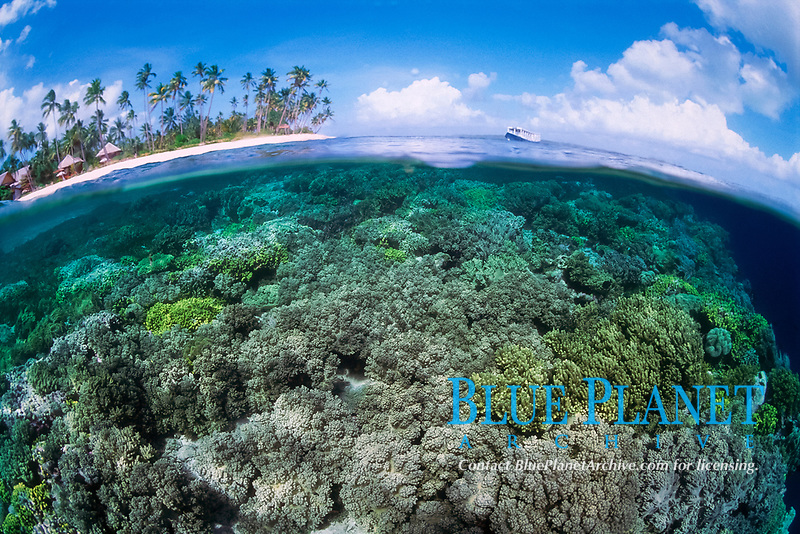 Splitfield, Over under, Palm trees, straw huts and leather corals, Onemoba'a, Tomia, Kepulauan Wakatobi National park, Southeast Sulawesi, Indonesia, Banda Sea, Indian Ocean