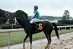 HOT SPRINGS, AR - JANUARY 16: Uncontested #6 with jockey Channing Hill aboard after winning the Smarty Jones Stakes at Oaklawn Park on January 16, 2017 in Hot Springs, Arkansas. (Photo by Justin Manning/Elipse Sportwire/Getty Images)