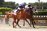 Wildcat Lily(#8) with Jose Alvarez up, outduel  Dreaming of Susie to in the Azalea Stakes(G3) at Calder Race Course, Summit of Speed day. Miami Gardens,  Florida. 07-06-2013