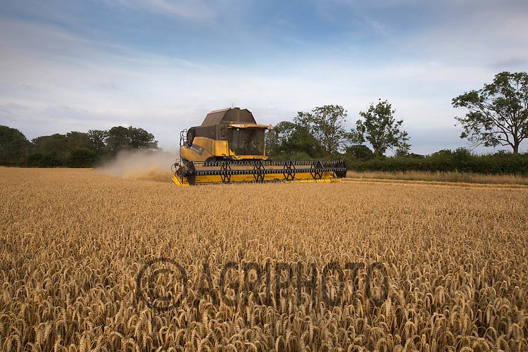 Harvesting Winter Wheat<br /> Picture Tim Scrivener 07850 303986