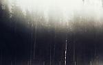 Belarussian forest. Belarussians forests are so huge that someone tolds that political opponents of neighbooring countries were killed there because anybody would be able to find them.<br /> Forêt biélorusse. On raconte des forêts biélorusses qu'elles sont si grandes que les opposants politiques des pays voisins y étaient enterrés afin qu'on ne les retrouve jamais.