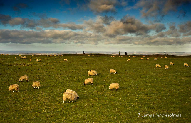 Sheep grazing in the centre of the Iron Age hill fort known as Uffington Castle, atop the White Horse Hil, at Uffington, Oxfordshire, UK on Mew Year's Day, 2013. Some of the any visitors to the hill fort can be seen walking the perimeter bank enclosing the castle.