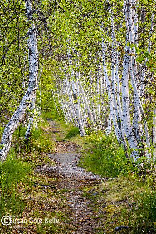 Jessup Trail at the Great Meadow, Acadia National Park, Downeast, ME, USA
