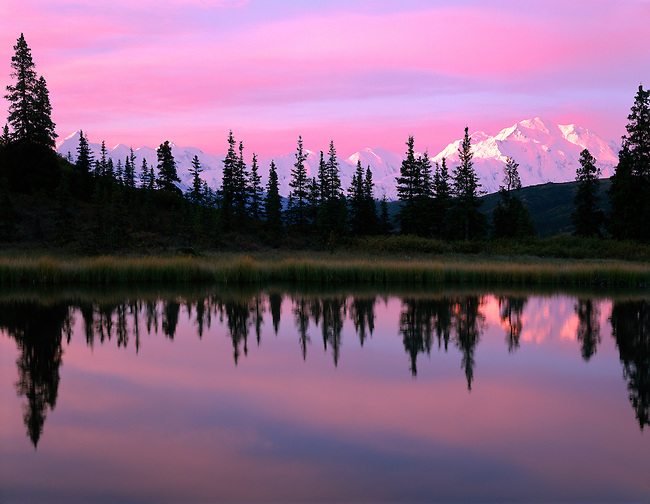 Denali National Park: Pink Sunrise. Denali, Mt. McKinley, reflects in Pebble Pond, Wyoming
