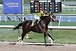 Constitution (KY) with jockey Javier Castellano on board wins wire to wire by 3 1/4 lengths in his allowance race at Gulfstream Park.  Hallandale Beach, Florida 02-22-2014