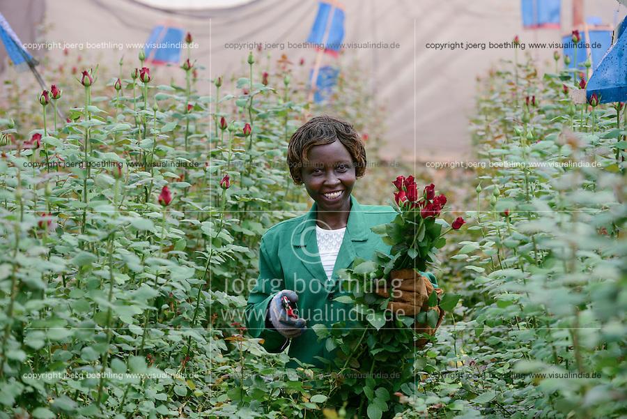 KENYA Thika near Nairobi, Simbi Roses is a fair trade rose flower farm which produces rose as cutting flowers for export to europe, worker Lucy Waithira Ngunga, 44 years old / KENIA Thika bei Nairobi, Simbi Roses ist eine fairtrade zertifizierte Blumenfarm die Rosen fuer den Export nach Europa anbauen, Pflueckerin Lucy Waithira Ngunga, 44 Jahre alt