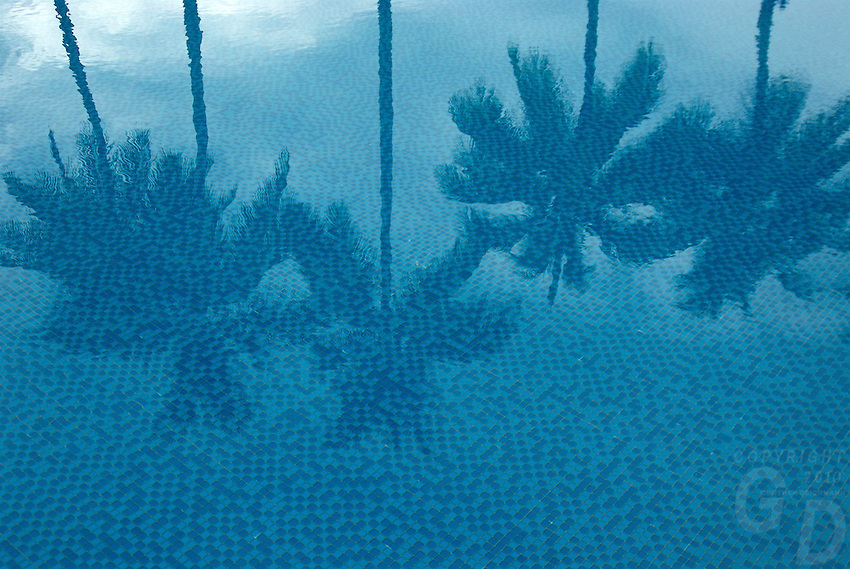 COCONUT TREES REFLECTION IN THE POOL, PALAU, MICRONESIA