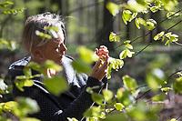 Frau im Wald, Frühlingswald, Buchenblätter sammeln, Buche, Rot-Buche, Rotbuche, Fagus sylvatica, Blätter werden gesammelt, geerntet, Ernte, Blatt, Blätterdach, Blattwerk, Buchenblatt, Kräuterernte, Common Beech, beech, leaf, leaves