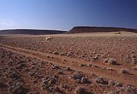 Natura in Namibia: paesaggio desertico deserto