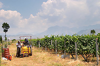 Vineyard workers on a tractor preparing for spraying. One man filling the tank with water. Ranxe mountains in the background. Kantina Miqesia or Medaur winery, Koplik. Albania, Balkan, Europe.