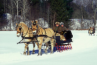 open sleigh ride, Vermont, VT, A team of Icelandic Horses pull a sleigh at the Sleigh Rally at Mad River Valley Winter Carnival at Lareau Farm in Waitsfield.