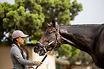 AUGUST 28, 2021:  Pappacap (Gun Runner) prepares for the Del Mar Futurity at Del Mar Fairgrounds in Del Mar, California on August 28, 2021. Evers/Eclipse Sportswire/CSM
