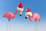 Studio shot of two flamingo's figurines wearing santa hats