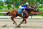 August 13, 2021: Trajecto #8, ridden by apprentice jockey Franchelie Santiago wins an apprentice schooling race. Owners and trainers allow students to ride their horses to gain the required experience they need to become a jockey at Hippodromo Camarero in Canóvanas, Puerto Rico on August, 2021. Carlos Calo/Eclipse Sportswire/CSM