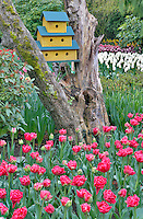 Roozengaarde display garden with birdhouse and mixed tulips. Mt. Vernon. Washington