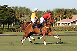 WELLINGTON, FL - NOVEMBER 25:  Mike Azzaro of Team USA (Red) hits a backshot as Team USA defeats Team Brazil, 9 - 7 in the USPA International Cup final, at the Grand Champions Polo Club, on November 25, 2017 in Wellington, Florida. (Photo by Liz Lamont/Eclipse Sportswire/Getty Images)