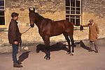 Brian Higham long serving Stud Groom at The Duke of Beaufort Badminton House estate. Morning inspection of the horses. 1995
