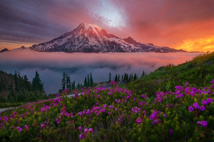 Sunrise light illuminates Mt. Rainier, photographed from high in the Tatoosh Range wilderness. One of the most impressive displays of light I have ever witnessed.<br /> Artist Edition: 15/100 Limited