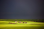 Herds on the steppe, Mongolia