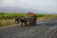 ETHIOPIA, Southern Nations, Arba Minch, banana plantation / AETHIOPIEN, Arba Minch, Bananenplantage