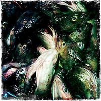 Fischmarkt in Riga.<br />16.3.2012, Riga/Lettland<br />Copyright: Christian-Ditsch.de<br />[Inhaltsveraendernde Manipulation des Fotos nur nach ausdruecklicher Genehmigung des Fotografen. Vereinbarungen ueber Abtretung von Persoenlichkeitsrechten/Model Release der abgebildeten Person/Personen liegen nicht vor. NO MODEL RELEASE! Don't publish without copyright Christian-Ditsch.de, Veroeffentlichung nur mit Fotografennennung, sowie gegen Honorar, MwSt. und Beleg. Konto: I N G - D i B a, IBAN DE58500105175400192269, BIC INGDDEFFXXX, Kontakt: post@christian-ditsch.de<br />Urhebervermerk wird gemaess Paragraph 13 UHG verlangt.]