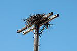 Osprey nest stand inside the Great Bay National Wildlife Refuge in New Hampshire.