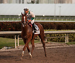 HALLANDALE BEACH, FL - March 3: Promises Fulfilled, #10, returns to the winners circle under jockey Irad Ortiz for trainer Dale Romans after winning the Xpressbet Fountain of Youth Stakes (Grade II) at Gulfstream on March 3, 2018 in Hallandale Beach, FL. (Photo by Carson Dennis/Eclipse Sportswire/Getty Images.)