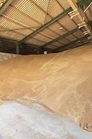 13-8-2021 Feed wheat in store<br /> ©Tim Scrivener Photographer 07850 303986<br />      ....Covering Agriculture In The UK....