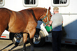 Draft horse and driver after horse pull competition at Cheshire Fair in Swanzey, New Hampshire USA