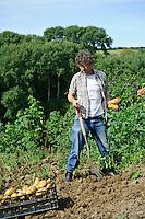 Harvesting the last Potatoes