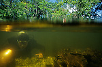 DOH; Who were the first Americans, Submerged Pre-Clovis site, in sinkhole, may have been watering hole, 12000 R.C.Y., Aucilla River, Florida, tools, artifact, fossils, ivory