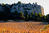 La Clape. Languedoc. Vine leaves. Vineyard. France. Europe. Vineyards below the white limestone cliff.