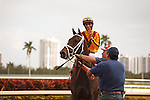 Kauai Katie dominates in the field in the 34th running of The Old Hat Stakes (G3) at Gulfstream Park.  Hallandale Beach Florida. 01-01-2013