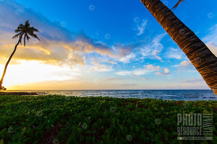 At sunset, the wind blows over naupaka at a black sand beach between Mauna Lani and Fairmont Orchid Resorts, Big Island.