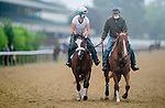June 19, 2020: Tiz The Law, the favorite to win the Belmont Stakes, is ponied by his trainer Barclay Tagg as horses prepare for the Belmont Stakes at Belmont Park in Elmont, New York. Scott Serio/Eclipse Sportswire/CSM