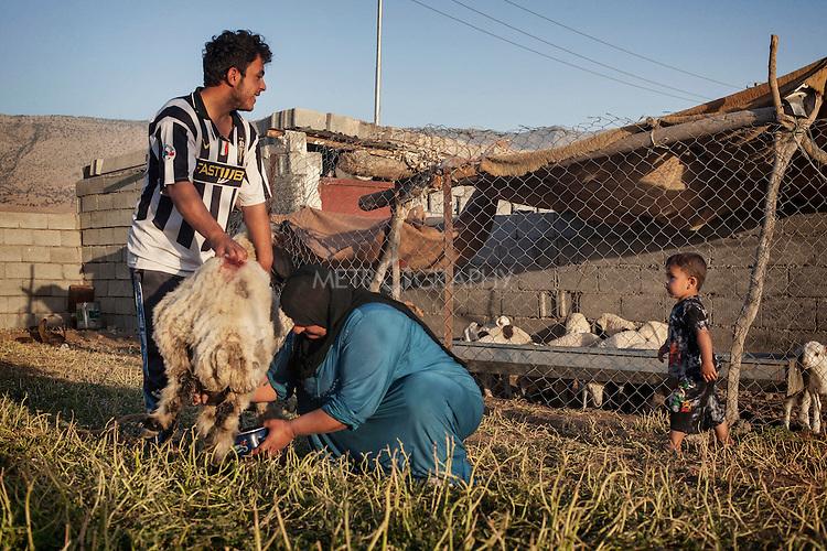 16/05/15. Awbar Village, Darbandikhan area, Iraq. -- Laith and his mother Samira milk a sheep