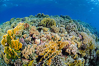 Scenic view of a coral reef, off Marsa Alam coast, South Red Sea, Egypt