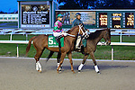 January 16, 2016: Dolphus with Brian Joseph Hernandez up before he was scratched from the Lecomte Stakes in New Orleans Louisiana. Steve Dalmado/ESW/CSM