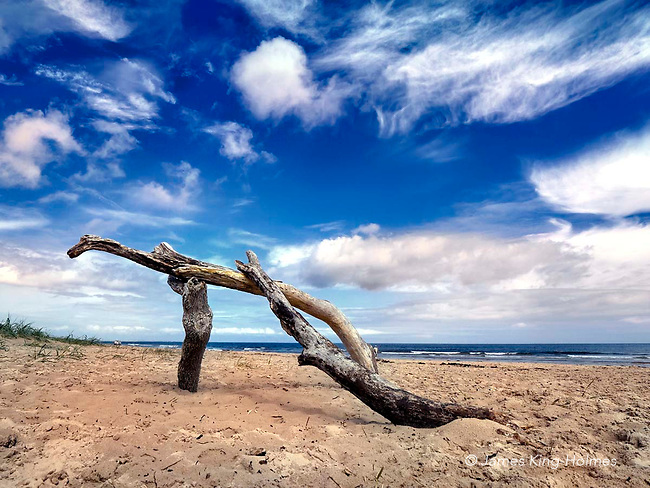 Pieces of driftwood which have formed a 'natural sculpture' on thea beach at Bamburgh, Northumberland, UK