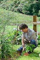 Planting out Pulmonaria