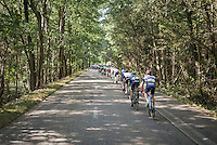 peloton through the woods<br /> <br /> 12th Eneco Tour 2016 (UCI World Tour)<br /> Stage 6: Riemst › Lanaken (185km)