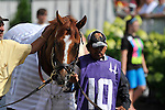 Wise Dan in the paddock before the G2 Firecracker Handicap at at Churchill Downs in Louisville, Kentucky on Monday July 4, 2011.