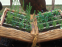 """Adorable """"Book"""" of herbs - herb container garden in a wicker planter made to look like an open book"""