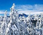 Fresh snow covers the pine trees and the Minaret Peaks, Eastern Sierra, California