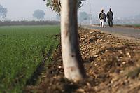 Punjab. India. 2013
