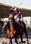 25 October 2008: Albertus Maximus and jockey Garrett Gomez win the TVG Breeders Cup Dirt Mile at Santa Anita Race Track in Arcadia, California.