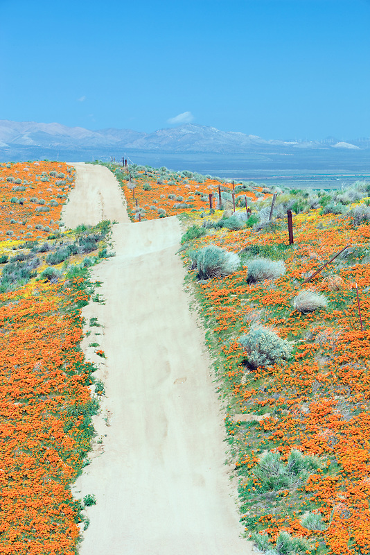 Road through Antelope Valley Poppy Preserve, California
