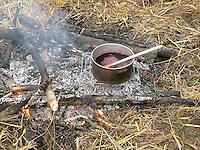 Zubereitung von Holunderpunsch, Fliederbeerpunsch, Schwarzer Holunder, Sambucus nigra am Lagerfeuer, Outdoor, Common Elder, Elderberry, Sureau commun, Sureau noir