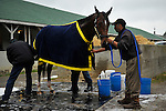 25 April 2010: Lookin At Lucky get his Monday morning bath after breezing 5f in 1:00.08 at Churchill Downs in Louisville, Kentucky.